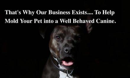 Video Branding Dogs Training